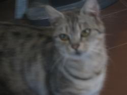 Upsala, chat Gouttière