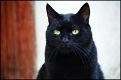 Uros, chat Gouttière