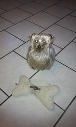 Uxel, chien Yorkshire Terrier