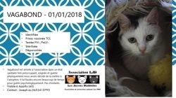 Vagabon, chat Gouttière