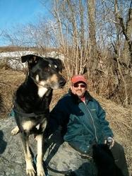 Vagabon, chien Berger allemand