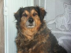 Valky, chien