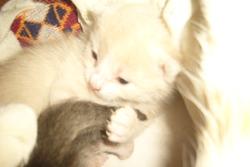 Bautée, chat