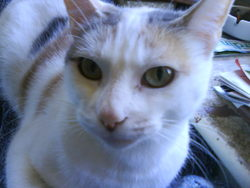 Vanille, chat