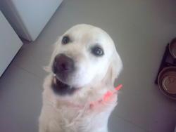 Vanina, chien