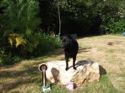 Eole, chien Schipperke