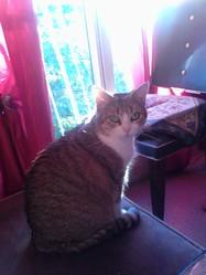 Venus Décédé, chat Gouttière