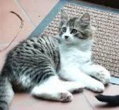 Vénusia, chat