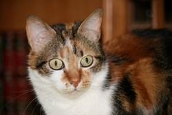 Vickie, chat Gouttière