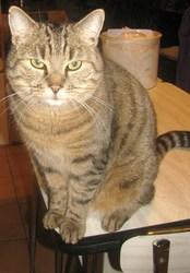 Vicko, chat Gouttière