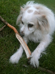 Vicky, chien