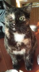 Vicky, chat Gouttière