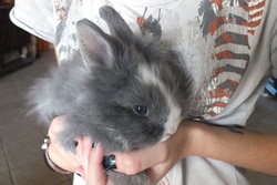 Vicky, rongeur Lapin
