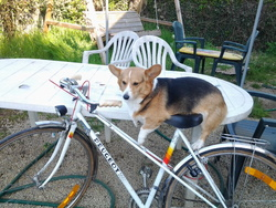 Victoire , chien