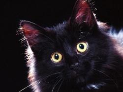 Victor, chat Gouttière
