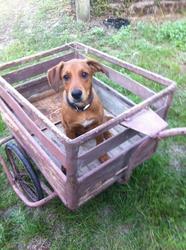 Viggo, chien
