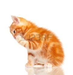 Noussa, chat