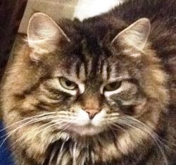 Vilaine, chat