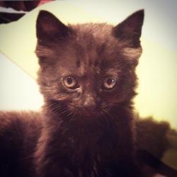 Vinyle, chat Gouttière