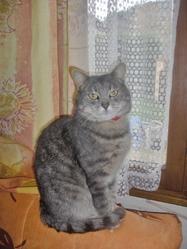 Violette, chat