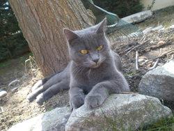 Viollete, chat