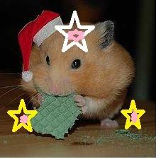 Viollette, rongeur Hamster