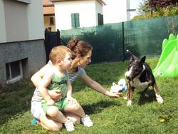Viper, chien Bull Terrier
