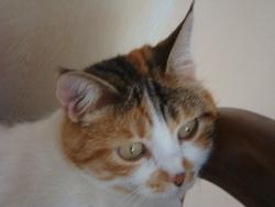 Virgule, chat Gouttière