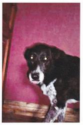 Vita, chien Border Collie