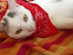 Vivie, chat Gouttière