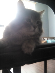 Voyou, chat