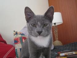 Voyou, chat Gouttière