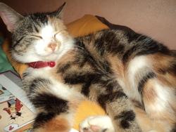 Waka, chat Gouttière