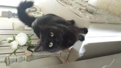 Waldo Kitty, chat Gouttière