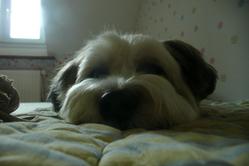 Wall-E, chien