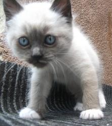 Wallace, chat Gouttière