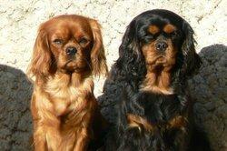 Walle Et Martie, chien