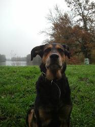 Wanda, chien