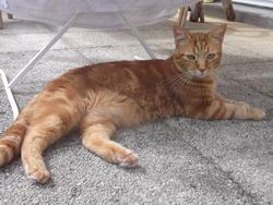 Watty, chat Gouttière