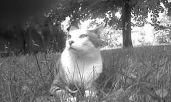 Wazari, chat Gouttière
