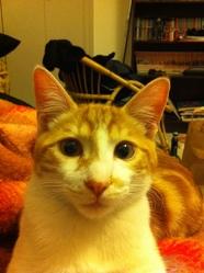 Weasley, chat Gouttière