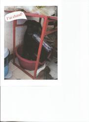 Wendy, chien Labrador Retriever
