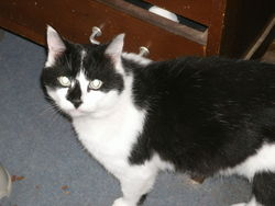 Whittey, chat Gouttière