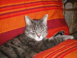 Wifi, chat Gouttière