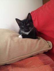 Wiiu, chat Gouttière