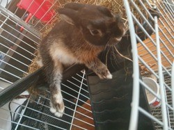Wiki, chien Border Collie