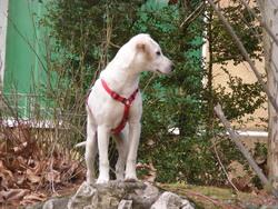Wikitt, chien