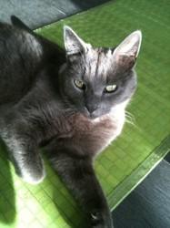 Wilson, chat Gouttière
