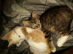 Windu, chat Gouttière