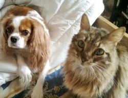 Winnie, chat Gouttière
